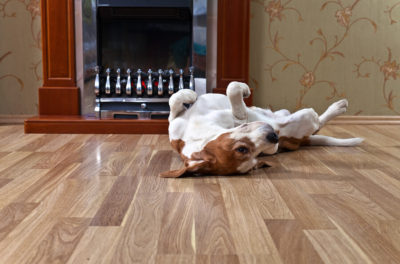 Pet Owners flooring guide