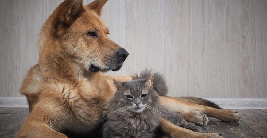 Pet Owners flooring guide