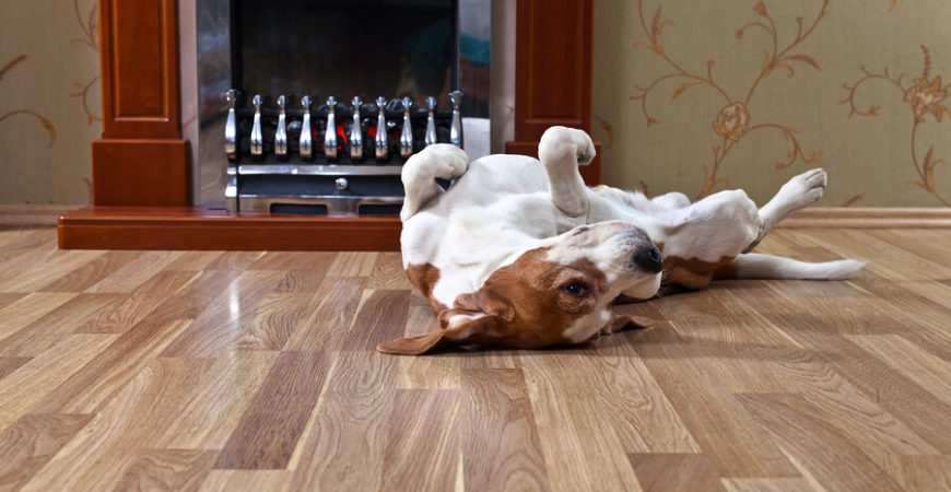 The Pet Owner's Guide to Flooring – Part 2