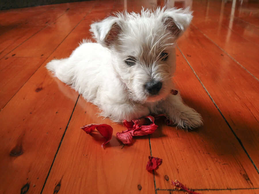 pet protection flooring guide
