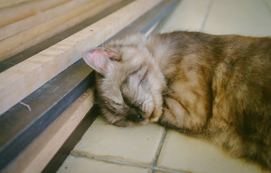 protect flooring from pets