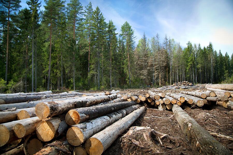 Deforestation wood flooring
