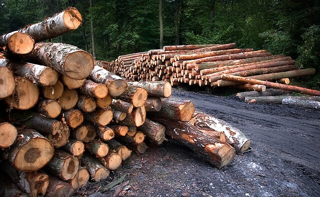 How the Hardwood Flooring Industry Protects the Environment – Part 1