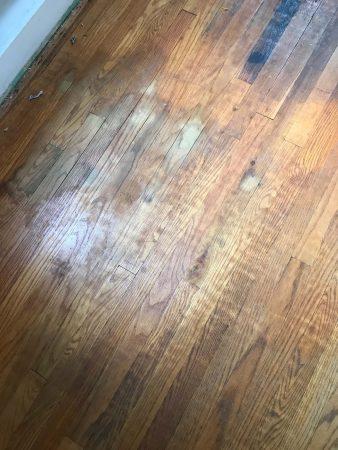 Oak Restoration 6