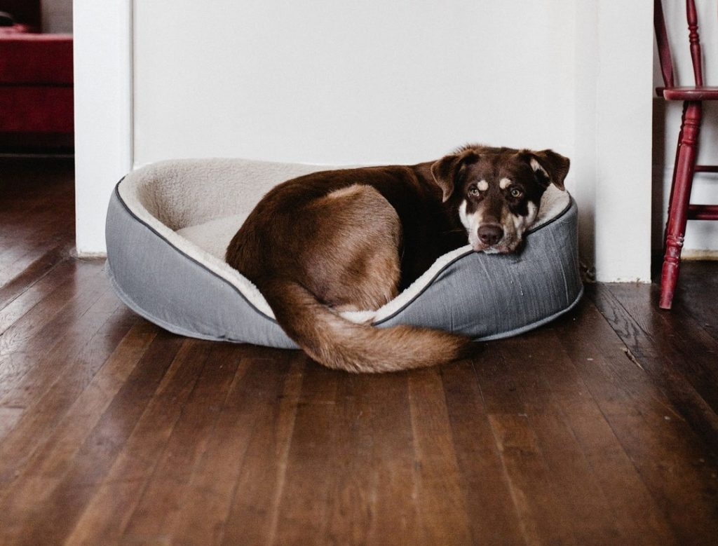 Dogs and Hardwood Floors: How to Prevent Scratching 4
