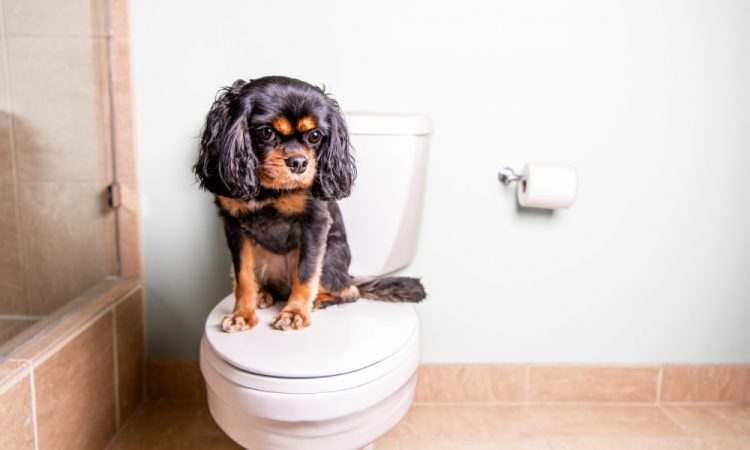 dog sitting on toilet