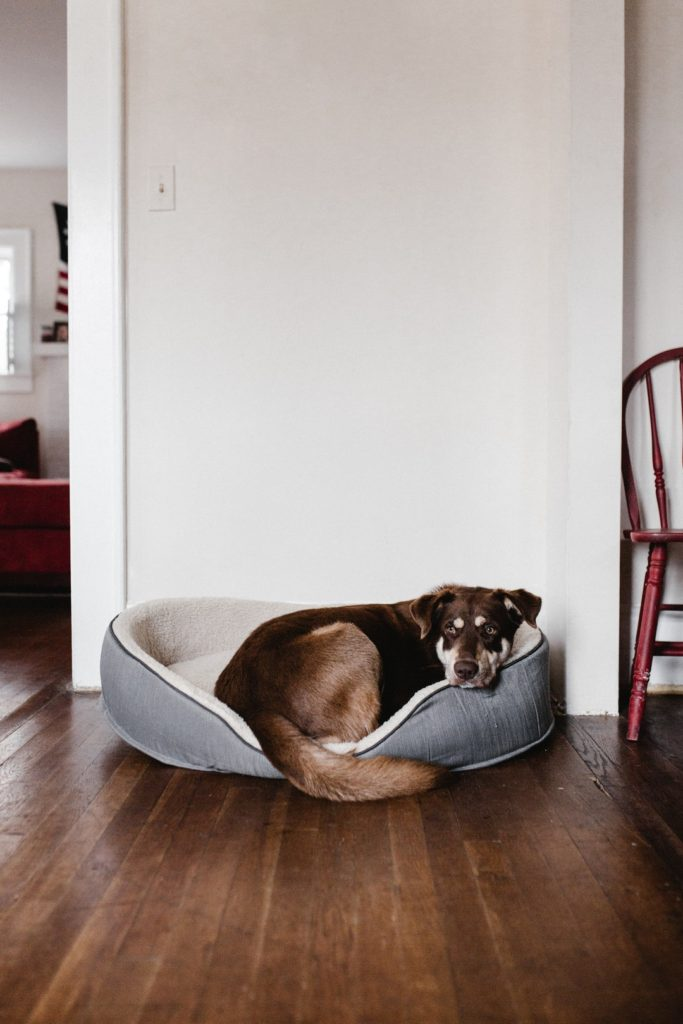 dogs and hardwood floors