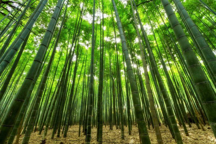 history of bamboo